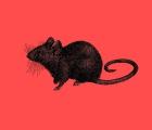 Las ratas, por Teatro Exiguo